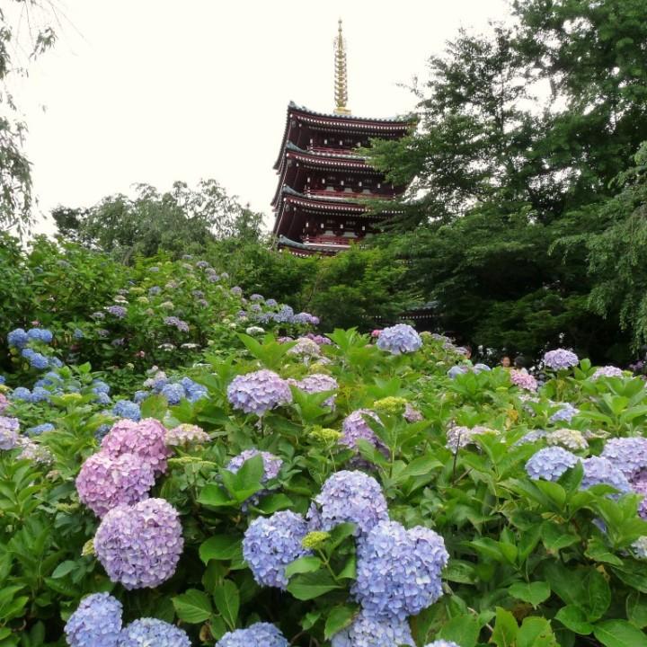 本土寺の五重の塔