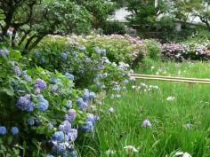 菖蒲池にて
