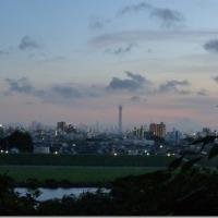 千葉県から見る東京スカイツリー>里見公園@千葉県市川市