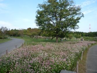 園内のソバ畑