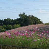 北総花の丘公園@千葉県印西市