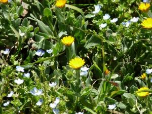 土手に咲いてた花