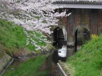 レンガ橋と桜