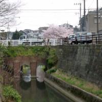 オススメ>坂川沿いの桜@千葉県松戸市