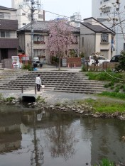 伊勢丹そばの枝垂れ桜