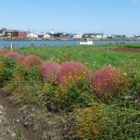 秋の中川やしおフラワーパーク@埼玉県八潮市