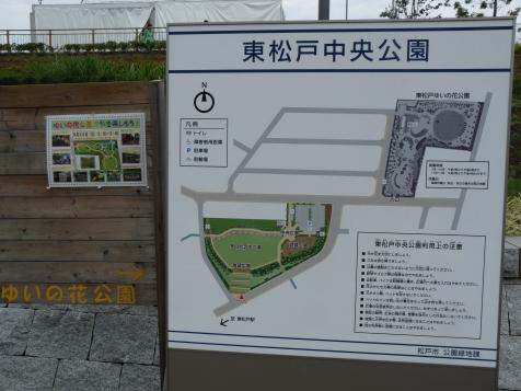 会場の東松戸中央公園