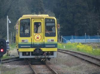 線路沿いの菜の花といすみ鉄道