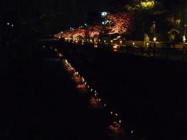 ライトアップされた桜と川面に映る桜