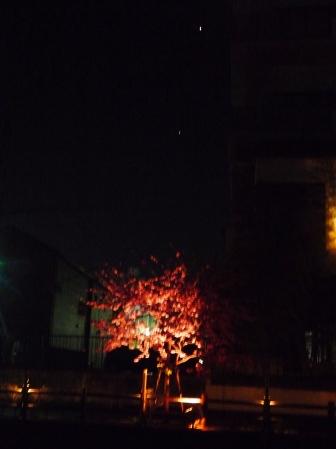 金星と木星と河津桜