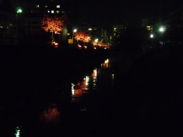 ライトアップされた桜と川面