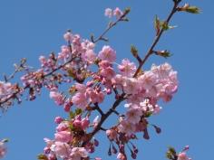 青空に映える花とつぼみ