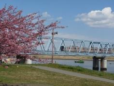 東京メトロ東西線と河津桜