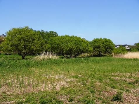 茂林寺沼の湿地帯