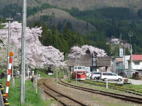 桜に囲まれた駅