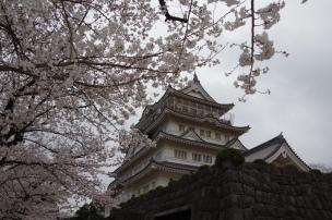 千葉城と桜2