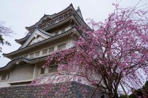 千葉城と枝垂れ桜