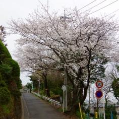 栗山浄水場へ向かう道