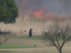 そばでゴルフやってました。