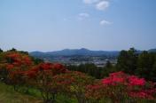 ツツジの向こうの仏頂山