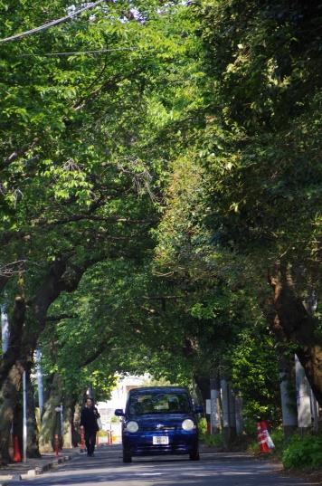 バス通りからの新緑のトンネル