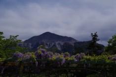 羊山公園の藤棚と