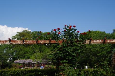 バラ園と藤棚