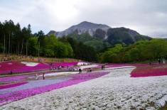 芝桜の丘にて