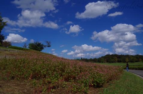 展望室の近くの丘
