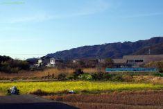北風を遮る鋸山と菜の花畑