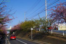 木によっては葉桜