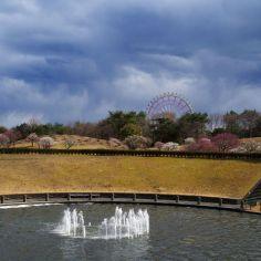 噴水と梅林と観覧車と雲