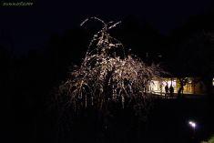 闇夜に浮かぶ枝垂れ梅