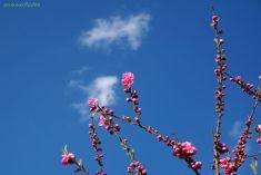 青空をバックに花と蕾