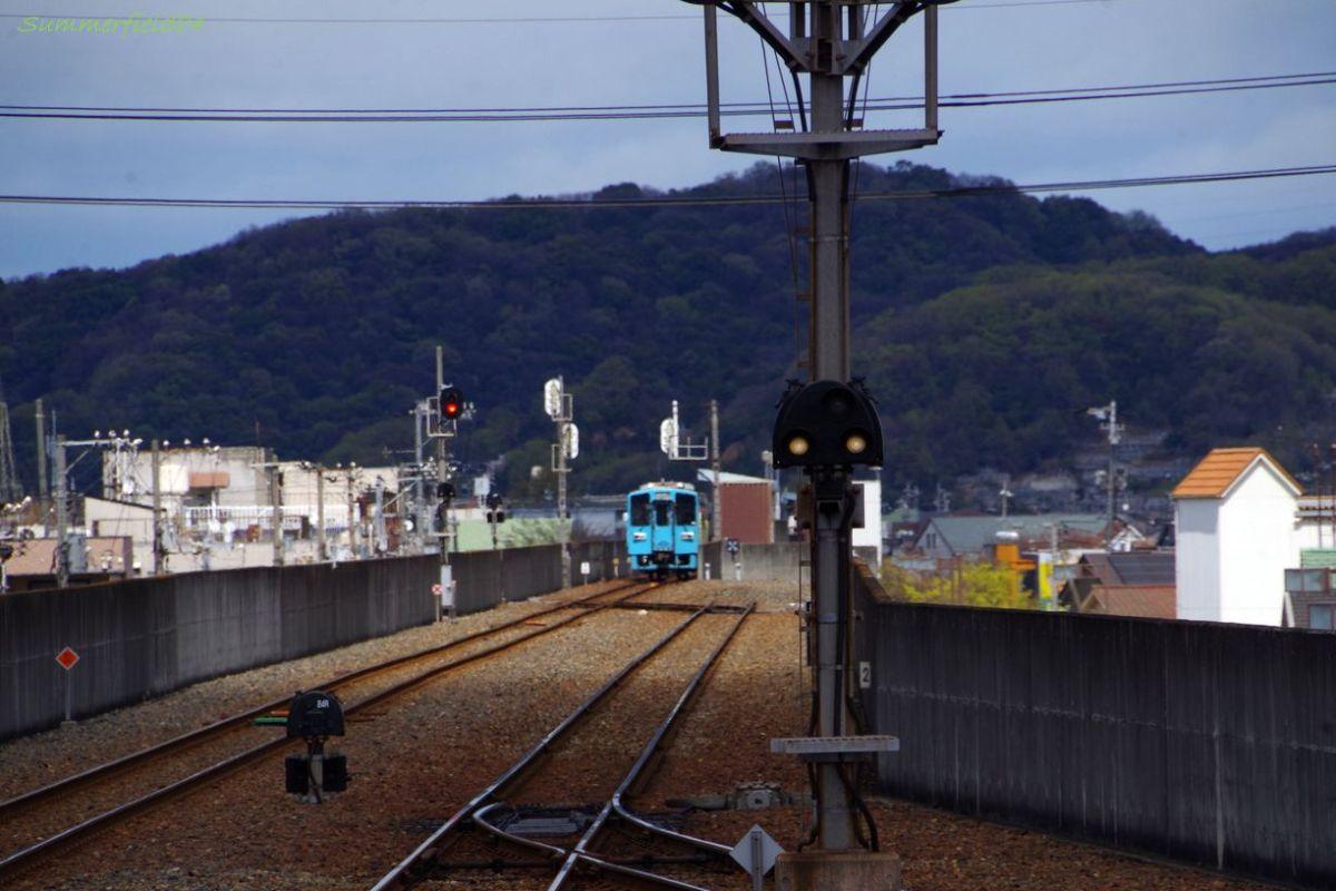 沿線の桜@水島臨海鉄道