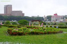 菖蒲園正門前のあじさい