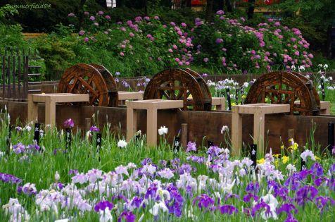 水車とアヤメと紫陽花