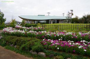 東松戸ゆいの花公園にて