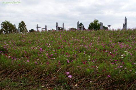 コスモス畑の境はなぎ倒されていました。