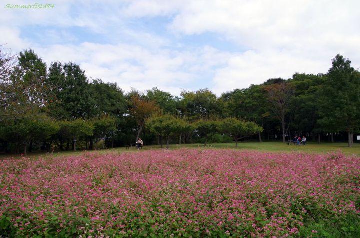 北総花の丘公園にて、こっちは健在でした。