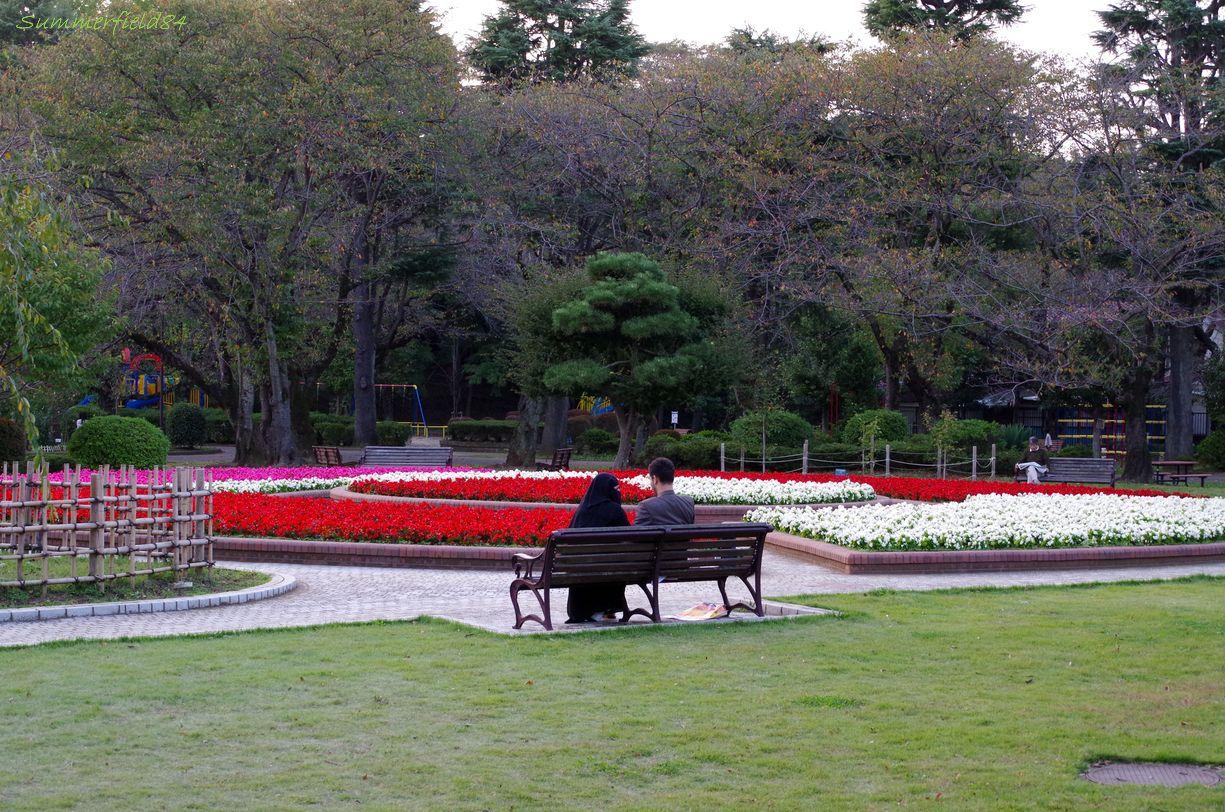 秋バラと夕焼けと@里見公園