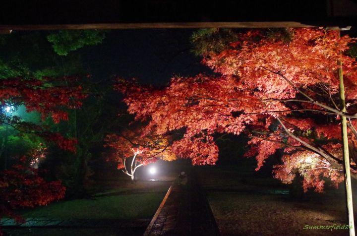 東漸寺の紅葉ライトアップ