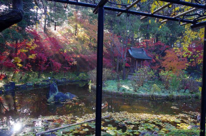 本土寺の弁天池にて