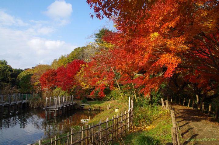 じゅんさい池緑地公園の紅葉のトンネル