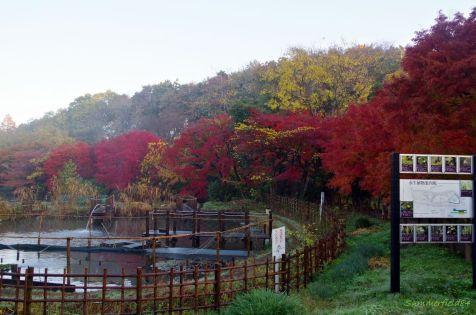 紅葉のトンネル南側