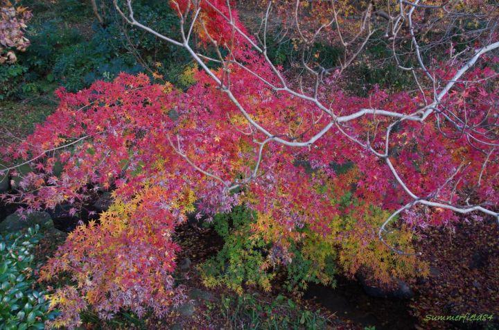 緑葉から枯葉まで色とりどり@松戸市の21世紀の森と広場