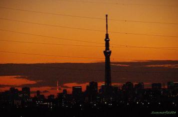ライトアップした東京タワーとスカイツリーのシルエット