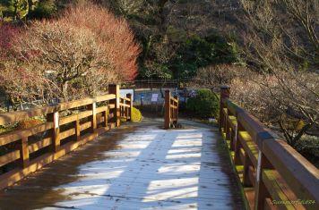 オマケ:凍てついた橋@熱海梅園