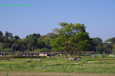 水生植物園全景