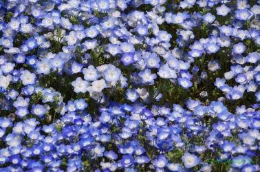 個々の花で色合いが違ってます
